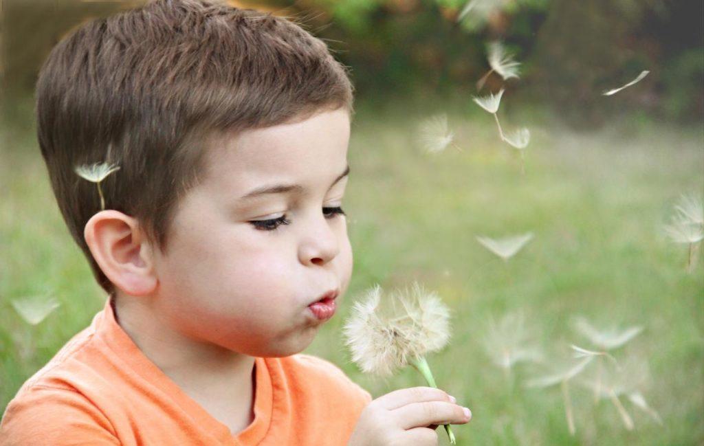 playground adelaide dandelion